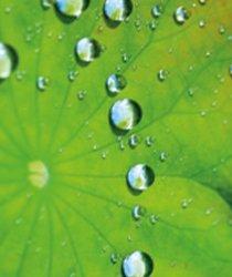 Lotusblatt Nanoversiegelung